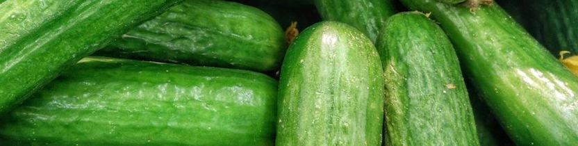 Mangez et découvrez : Le concombre long vert maraîcher